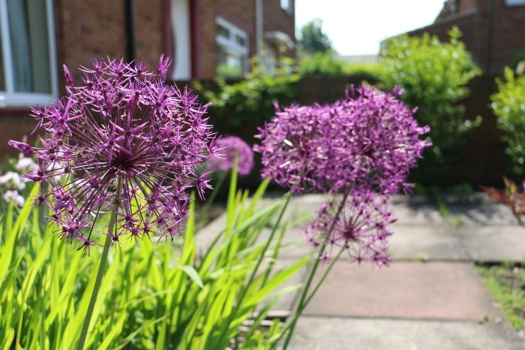 Garden in May