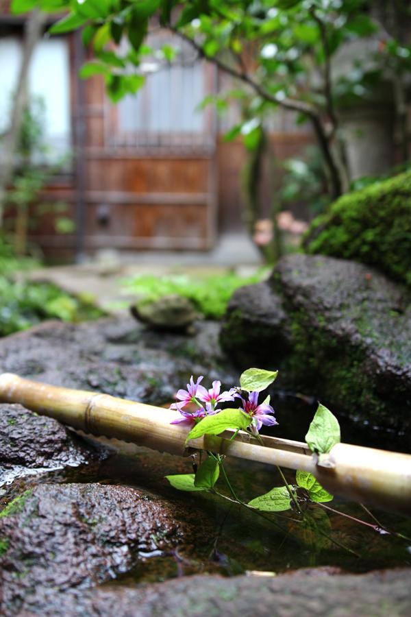 April in Japan - Marsh of Gold