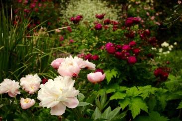 Glimpses of Sissinghurst Castle Garden