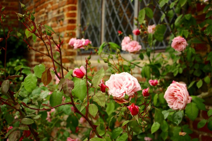 Glimpses of Sissinghurst Castle Garden