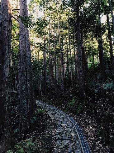 Walking in Japan | 20181119 Kumano Kodo